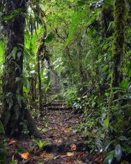 CostaRicaMonteverdeSelvaturaHangingbridges3