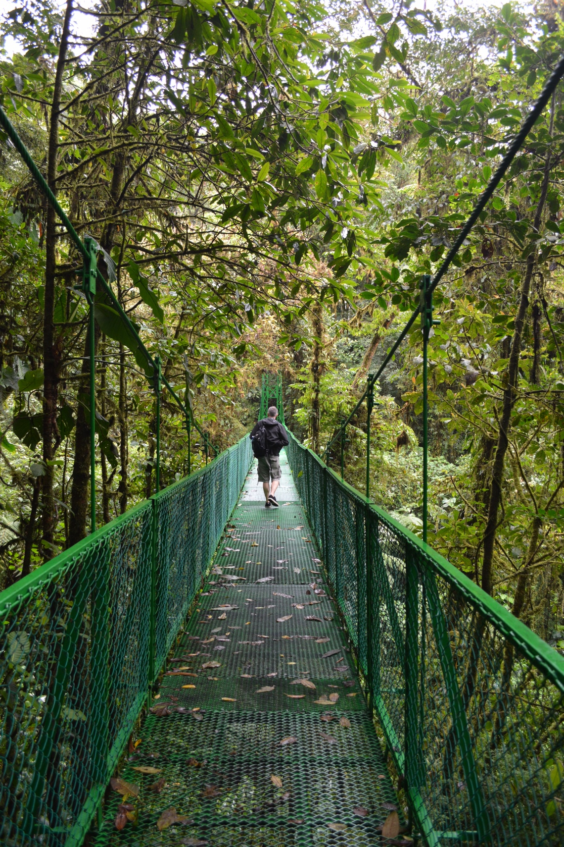 CostaRicaMonteverdeSelvaturaHangingbridges7