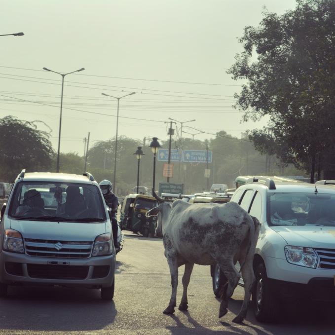 Agra2017IndiaStreetsINSTA