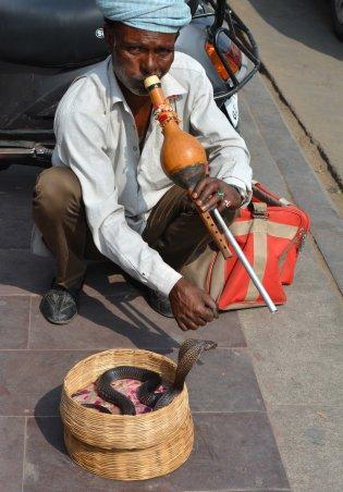 Jaipur2017Indiacobrasnakecharmersmall