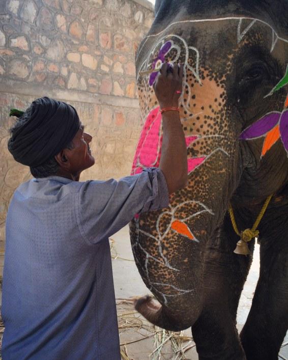 Jaipur2017IndiaElephantVillage2INSTAsmall