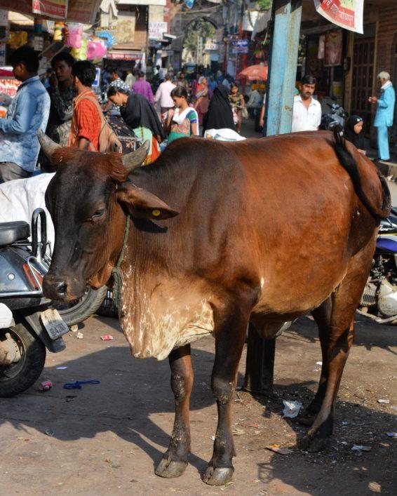 IndiaJodhpurStreetsOct2017-13