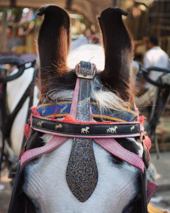 Jodhpur2017IndiastreetsMewarhorse2INSTAsmall