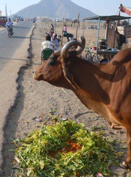 Pushkar2017IndiaCamelFair10small