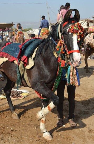 Pushkar2017IndiaCamelFair11small