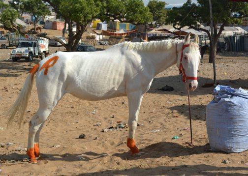 Pushkar2017IndiaCamelFair18small