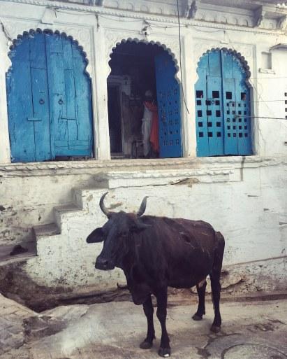 Udaipur2017India39small