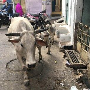 Udaipur2017India41small