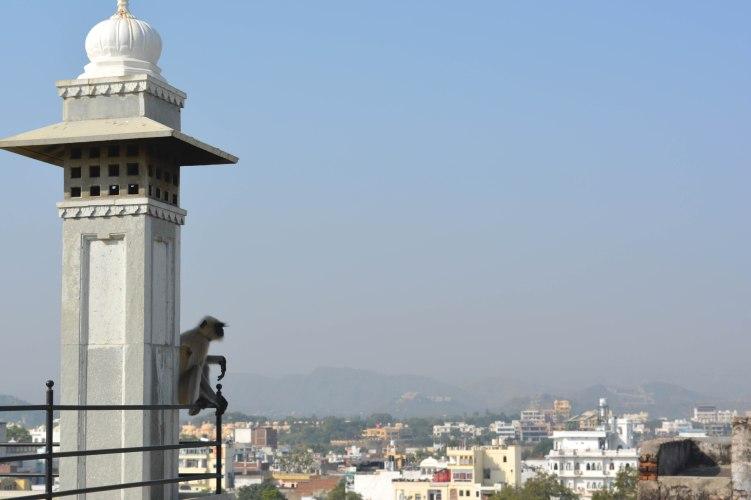 Udaipur2017IndiaMadriHavelirooftop1small