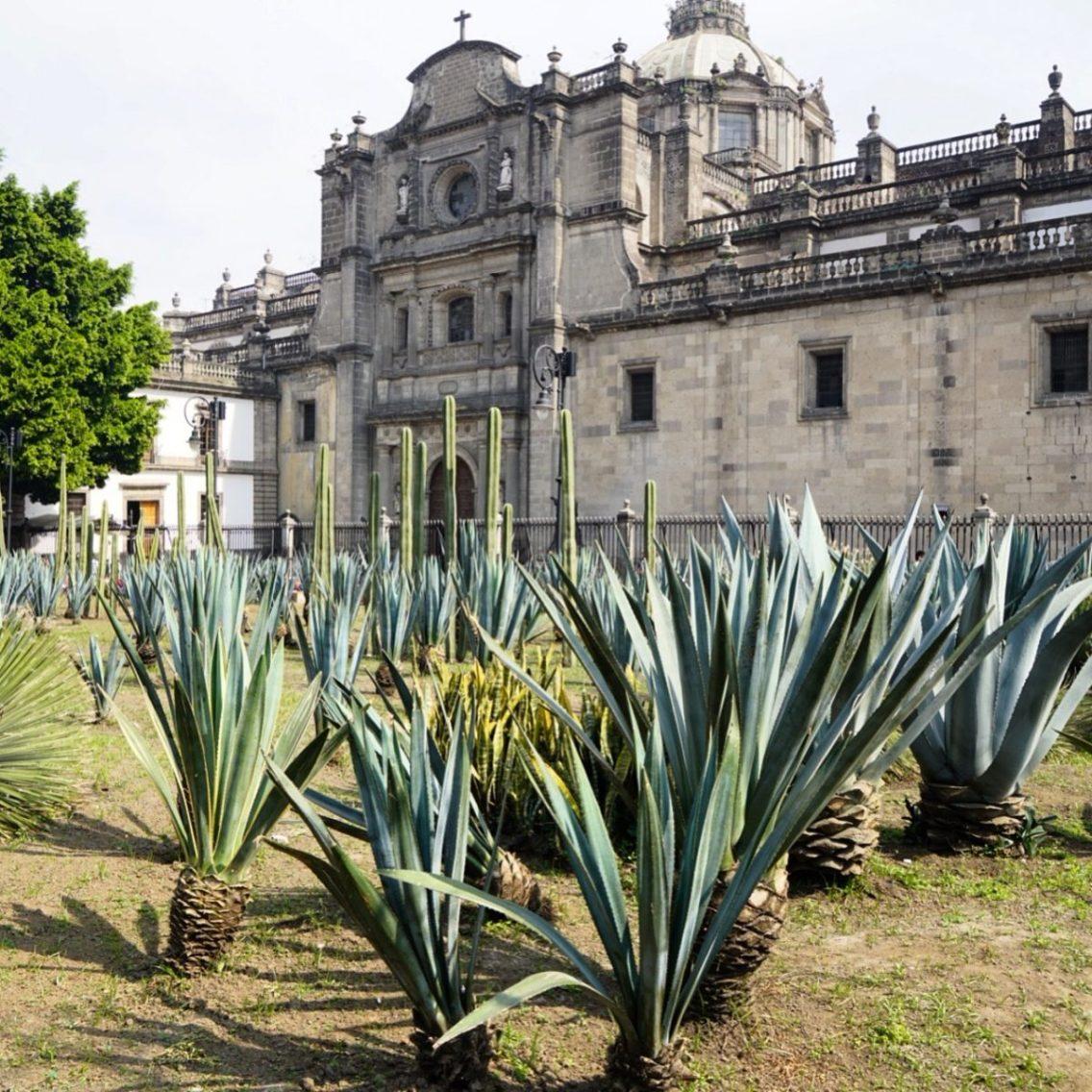 MexicoCityDec2018Zocalo-9