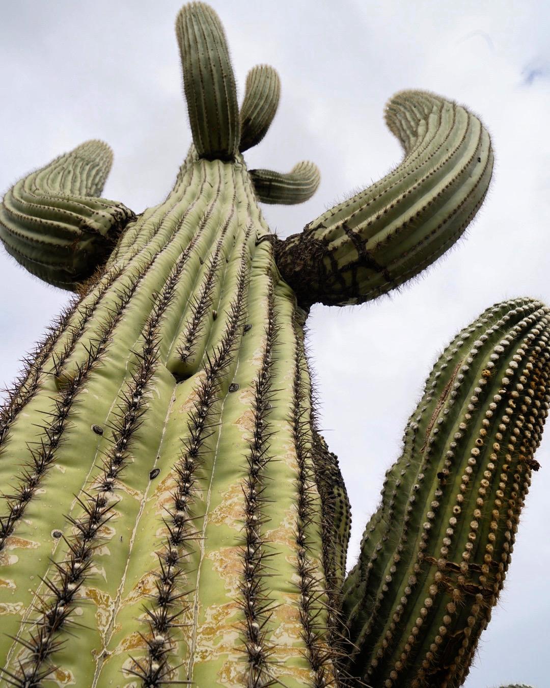 ArizonaOrganPipeDec2019INSTA-2