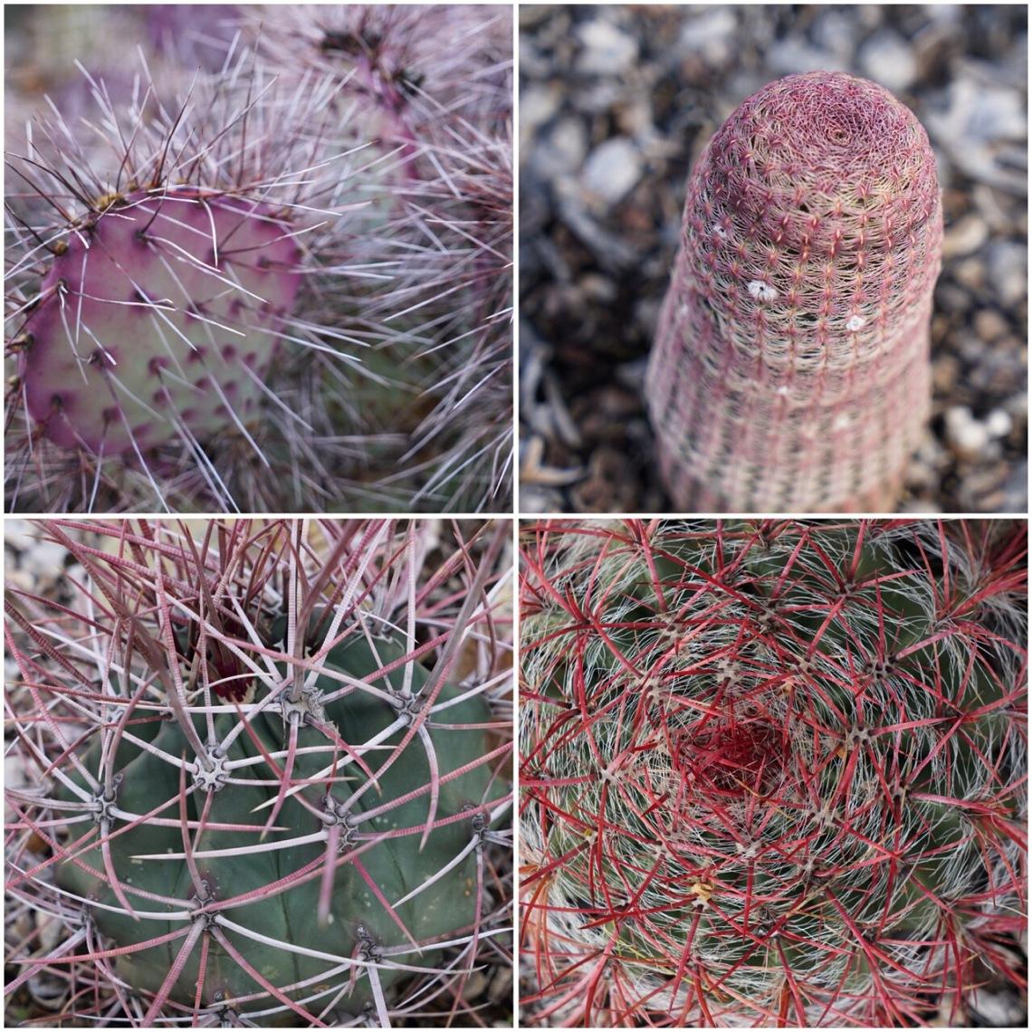 ArizonaSonoraDesertMuseumDec2019-20