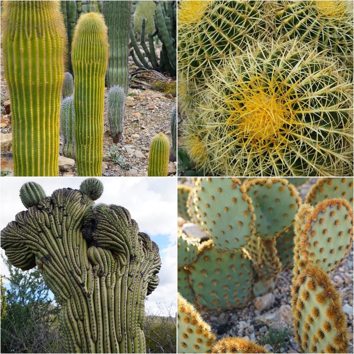 ArizonaSonoraDesertMuseumDec2019-22