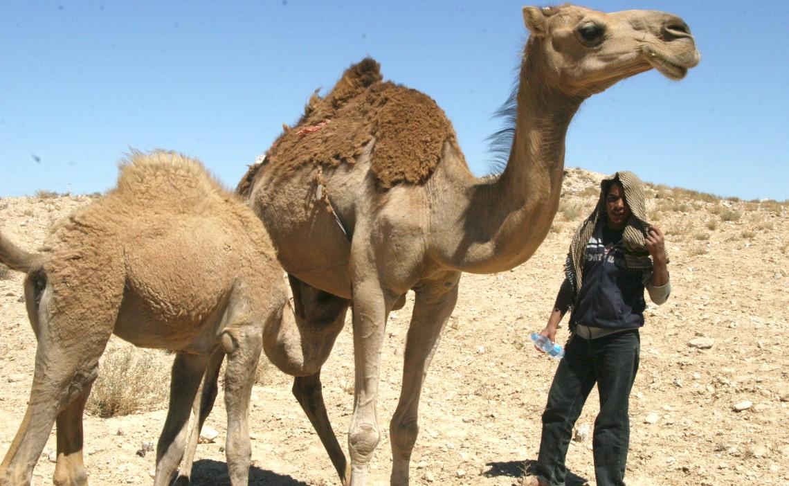 JordanlastdaycamelmilkingSept2010-1